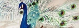 Peacock Watercolour